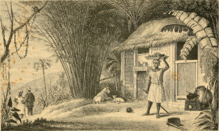 scene-in-jamaica